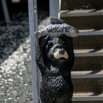 Delta Hawaii Welcome Bear